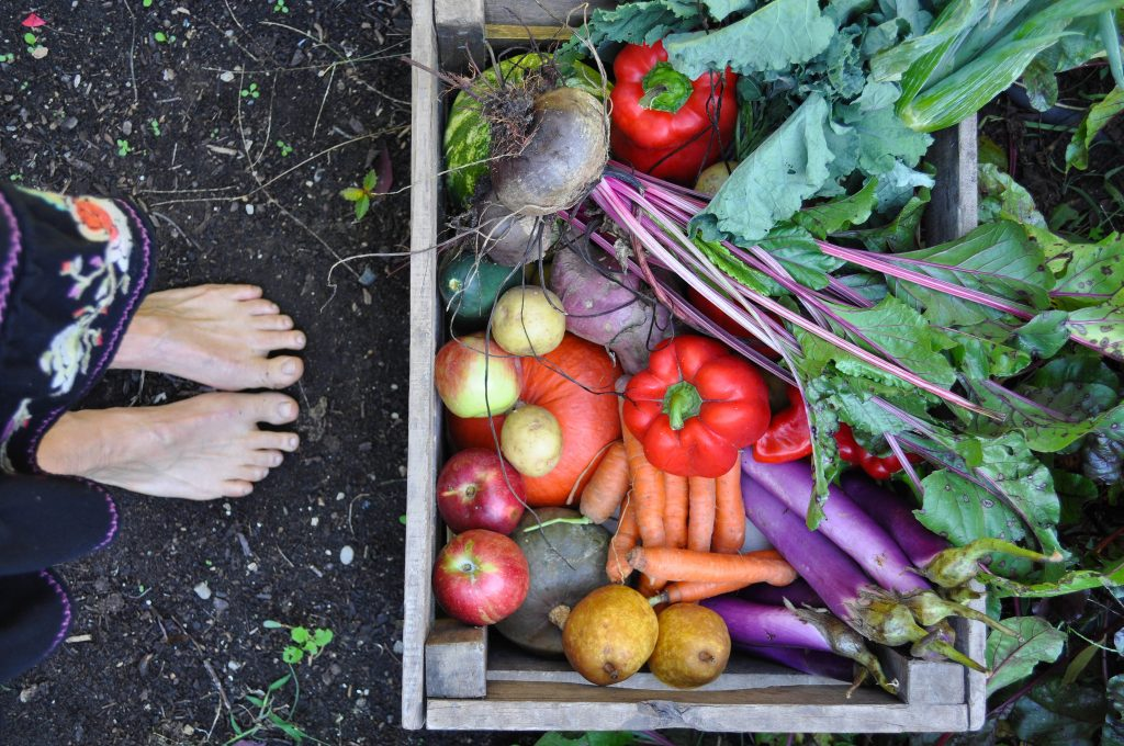 feet with CSA box